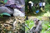 À la découverte de la faune de l'île de Ba Mùn
