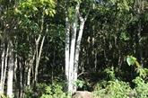 Développer l'économie forestière dans les zones montagneuses