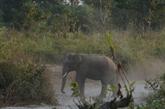 Inde : un éléphant