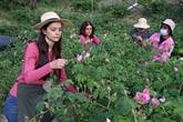 À Chypre, les plantes aromatiques pour attirer de nouveaux touristes