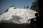 Coton : le Togo veut relancer sa course vers l'or blanc