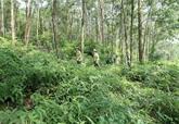 Faire revivre les forêts