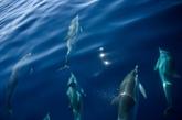 Méditerranée : des chercheurs pointent l'