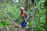Côte d'Ivoire : des agricultrices plantent bio pour sortir de la pauvreté