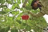 L'agriculture de Hà Tinh entame sa transition numérique