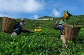 Dans les collines malaisiennes, les cultivateurs plombés par la pandémie de COVID-19