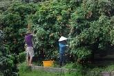 Le Vietnam vise 45 milliards d'USD d'exportations de produits agroforestiers et aquatiques en 2021