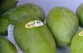 La mangue verte du Vietnam promue en Australie