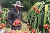 Les exportations de fruits et légumes devraient atteindre quatre milliards d'USD en 2021