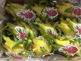 Les fruits du dragon vietnamiens appréciés en Australie