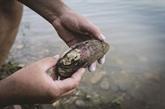 Moules d'eau douce... inquiétude pour les mollusques non-marins métropolitains