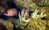 Des structures d'éponge sont peut-être la plus vieille forme de vie animale