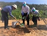 Plantation de 108.258 ha de forêts au premier semestre
