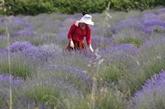 Depuis la pandémie, les herbes sont plus vertes en Albanie