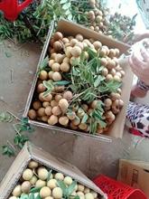 Pour mieux écouler les fruits et légumes