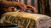 Dans le delta du Nil, des fermiers veulent sauver le papyrus