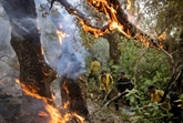 L'incendie dans le Nord du Maroc