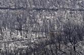 Algérie : tous les incendies ont été éteints