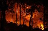 Incendies en Turquie : l'UE envoie trois Canadair, le nombre de victimes s'élève à huit