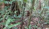 Binh Phuoc : six animaux rares et précieux relâchés dans la nature