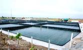 Production high-tech pour l'essor des produits aquatiques à Ninh Binh