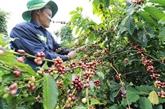 Les exportations du café sous pression en raison des frais logistiques élevés et du COVID-19