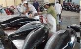 Les États-Unis, toujours le premier débouché du thon du Vietnam
