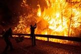 La faune sauvage sous la menace des incendies