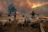 Incendies : 300 personnes évacuées près d'Athènes, une centrale menacée en Turquie