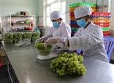 Vietnam et Chine signent unprotocole d'accordsur l'écoulement de fruits