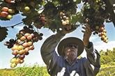 Confidentiels, les vins d'altitude de Bolivie misent sur leur particularisme