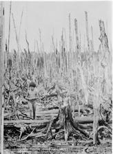 La dioxine : le poison de la guerre