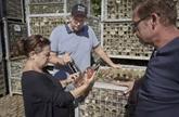 Une cuvée sauvée des eaux, lueur d'espoir des vignerons allemands sinistrés