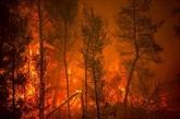 Désespoir sur l'île grecque d'Eubée en flammes, accalmie en Turquie