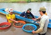 Les coques de sang apportent du sang neuf à Dông Thoi