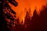 Des séquoias emballés dans de l'alumunium pour les protéger des incendies