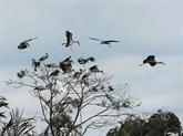 Il consacre sa vie aux oiseaux sauvages