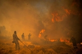 Les feux de l'été ont causé des émissions record de CO2, selon Copernicus