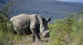 Sensibiliser le public à la conservation des rhinocéros