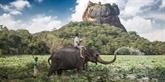 Le Sri Lanka partage ses perspectives touristiques avec le Vietnam
