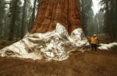 Californie : combattre le feu par le feu pour sauver les forêts