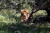 Le monde au chevet d'une nature en danger au congrès de l'UICN
