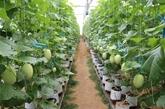 Australie - Vietnam : opportunités de coopération dans l'agriculture high-tech