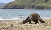 Le dragon de Komodo et de nombreux requins menacés