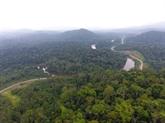 Évaluer et financer le stockage de CO2 : la forêt gabonaise en exemple
