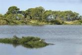 Montée des mers : les salins d'Hyères font sauter les digues et laissent faire