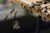 La danse des abeilles inspire la recherche sur des mini-robots