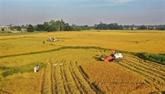 COVID-19 : préparer des plans de production agricole dans la nouvelle situation