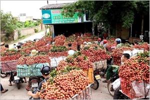 Un nouveau record des exportations des produits agricoles sylvicoles et aquatiques du Vietnam