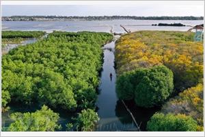 La mangrove Ru Cha en automne